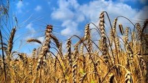 Агрокооператив в современных экономических условиях