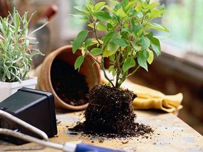 Уход за комнатными растениями в зимний период