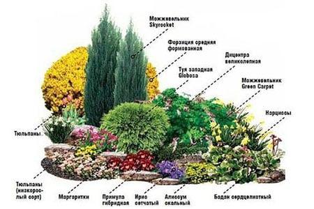 Аромат любимого сада