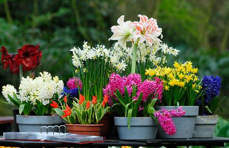 Как правильно высаживать цветы весной