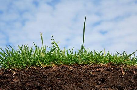 Преимущества искусственной почвы