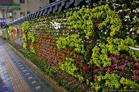 Строим цветочную стену