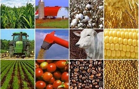 Реструктуризация сельского хозяйства