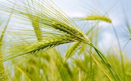 Экологический менеджмент предпринимательской деятельности в аграрной сфере