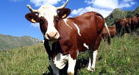 Влияние влажности и радиации на продуктивность животных