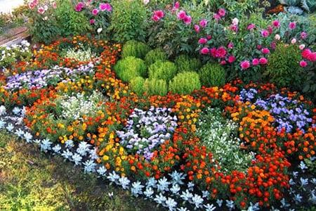 Какие цветы однолетники выбрать для клумбы