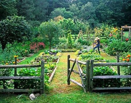 Сад «огородного» типа