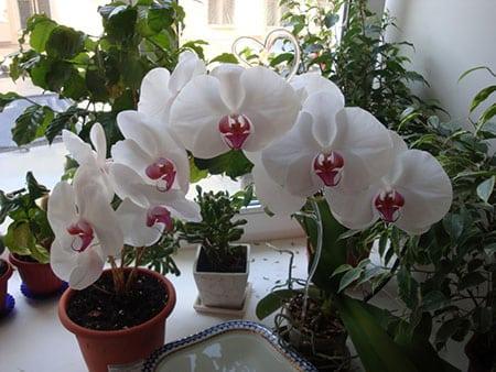 naibolee-chasto-zadavaemyie-voprosyi-po-kulture-orhidey-02
