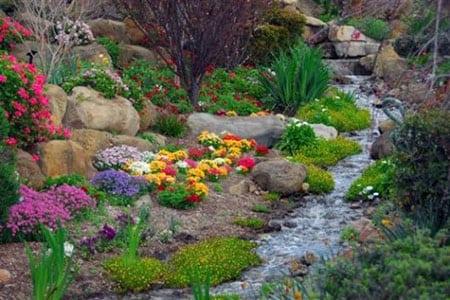 Растения для рокария