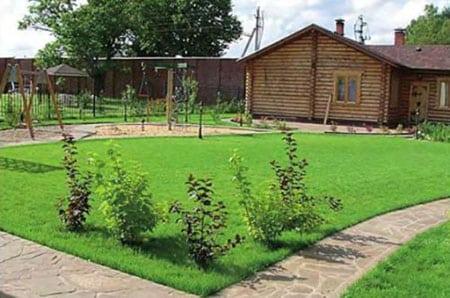 Газон на садовом участке