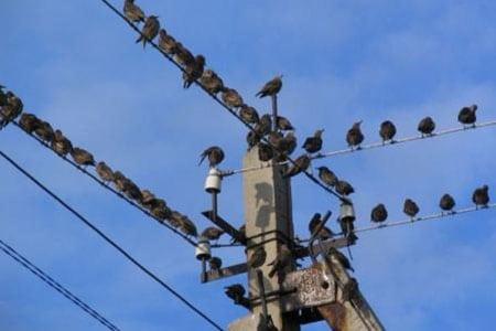 Борьба с птицами, «за» и «против»