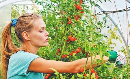Главное сейчас - уберечь урожай от болезней и вредителей