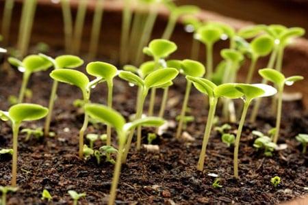 Как сделать удобрения для огорода