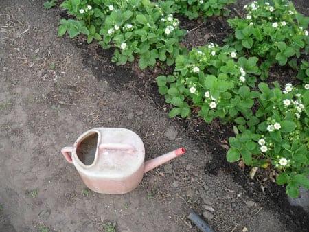 Подкармливаем растения
