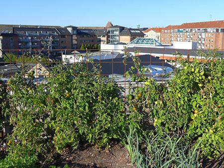 Ферма на крыше