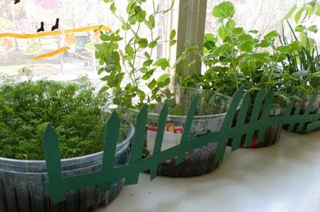 Как вырастить помидоры, зелень на подоконнике вместе с детьми