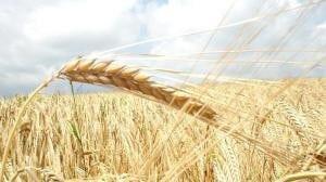 Социальная ответственность в аграрном бизнесе