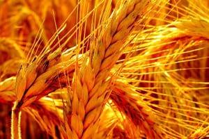 Экономическая оценка инновационной деятельности сельскохозяйственных предприятий