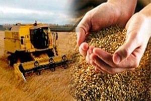 Активизация экспортной деятельности предприятий аграрного сектора