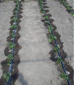 Как организовать систему поливки огорода