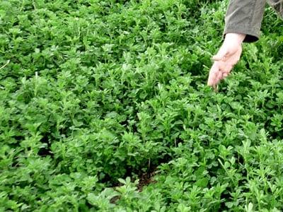 Пути энергосбережения в растениеводстве