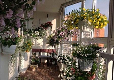 Балконные растения зимой