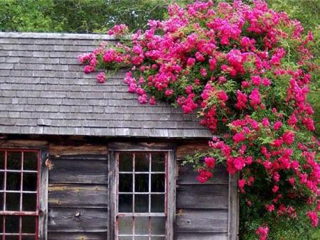 Многолетние растения - выращивание в саду