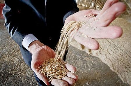 Необходимость инновационной инфраструктуры на зерновом рынке