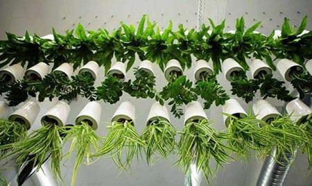 Технология высадки растений в фитомодули