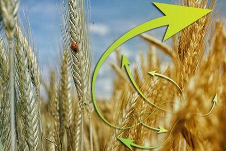 Влияние инноваций на развитие сельского хозяйства