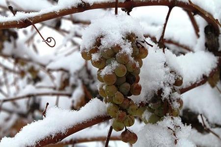 Как помочь растению пережить сильные морозы?