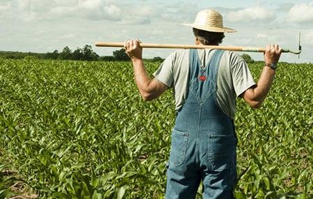 Пути совершенствования ведения аграрного бизнеса