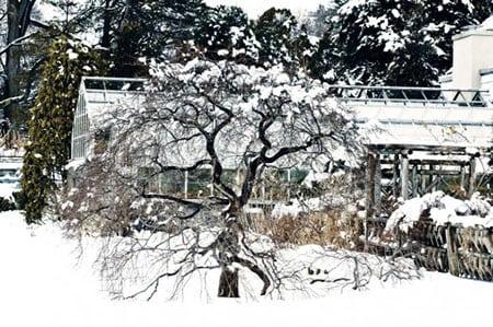 Садово огородный февраль