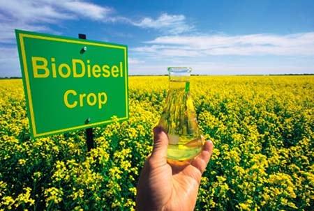Внутрихозяйственный контроль за производством биодизеля