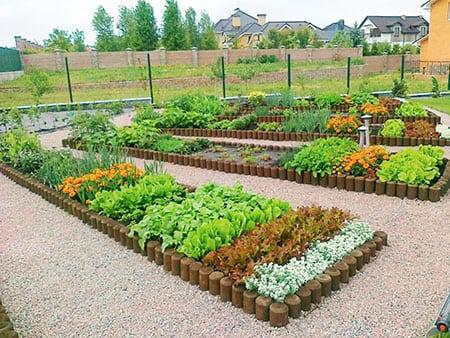 Декоративный огород: дизайн и устройство