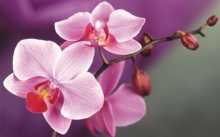 Правильная покупка орхидеи