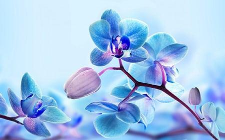 Живые драгоценности мира орхидей