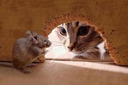 Kак вывести крыс из сарая