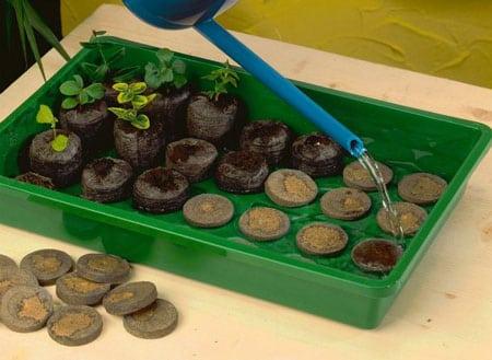 Торфяные таблетки помогут получить высокий урожай растений