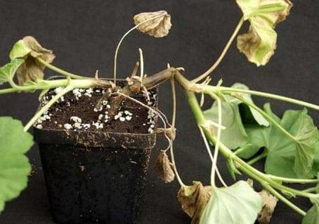 Растения тоже болеют