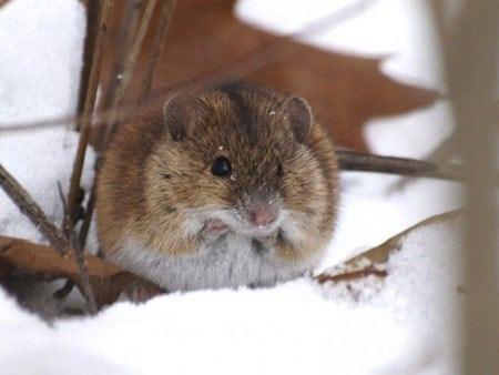 Как спасти деревья от мышей и зайцев