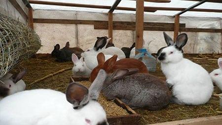 Кролиководство как способ заработка