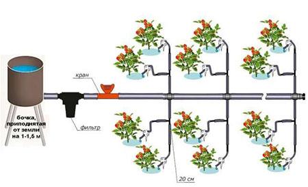 Автоматический полив огорода – спасение для дачника